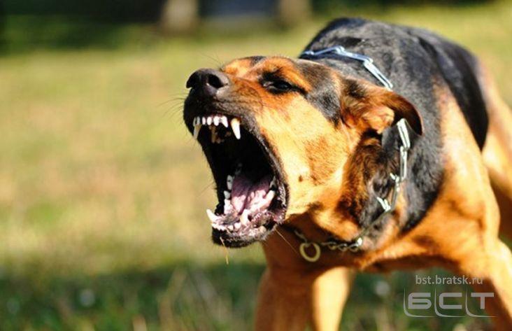 Хозяин собак, которые загрызли двухлетнего ребенка вВихоревке, предстанет перед судом