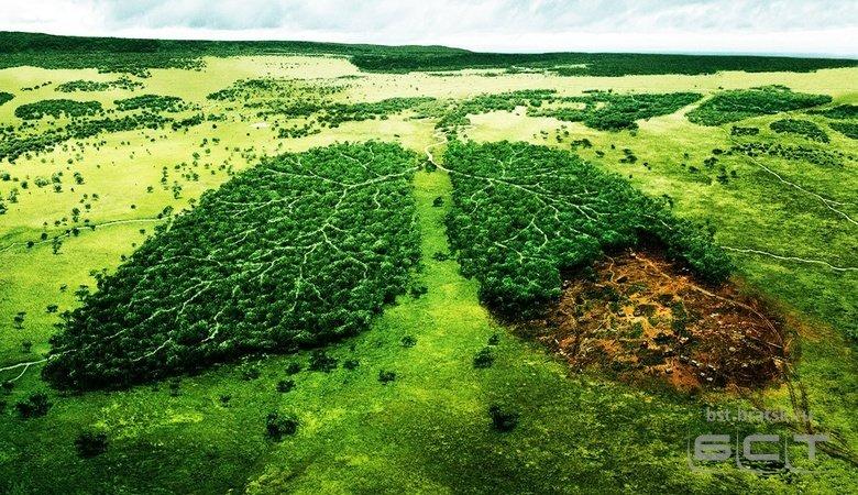 Госдума приняла закон об обязательном восстановлении лесов в объемах, равных их вырубке
